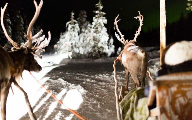 Reindeer Sleigh in the Snow