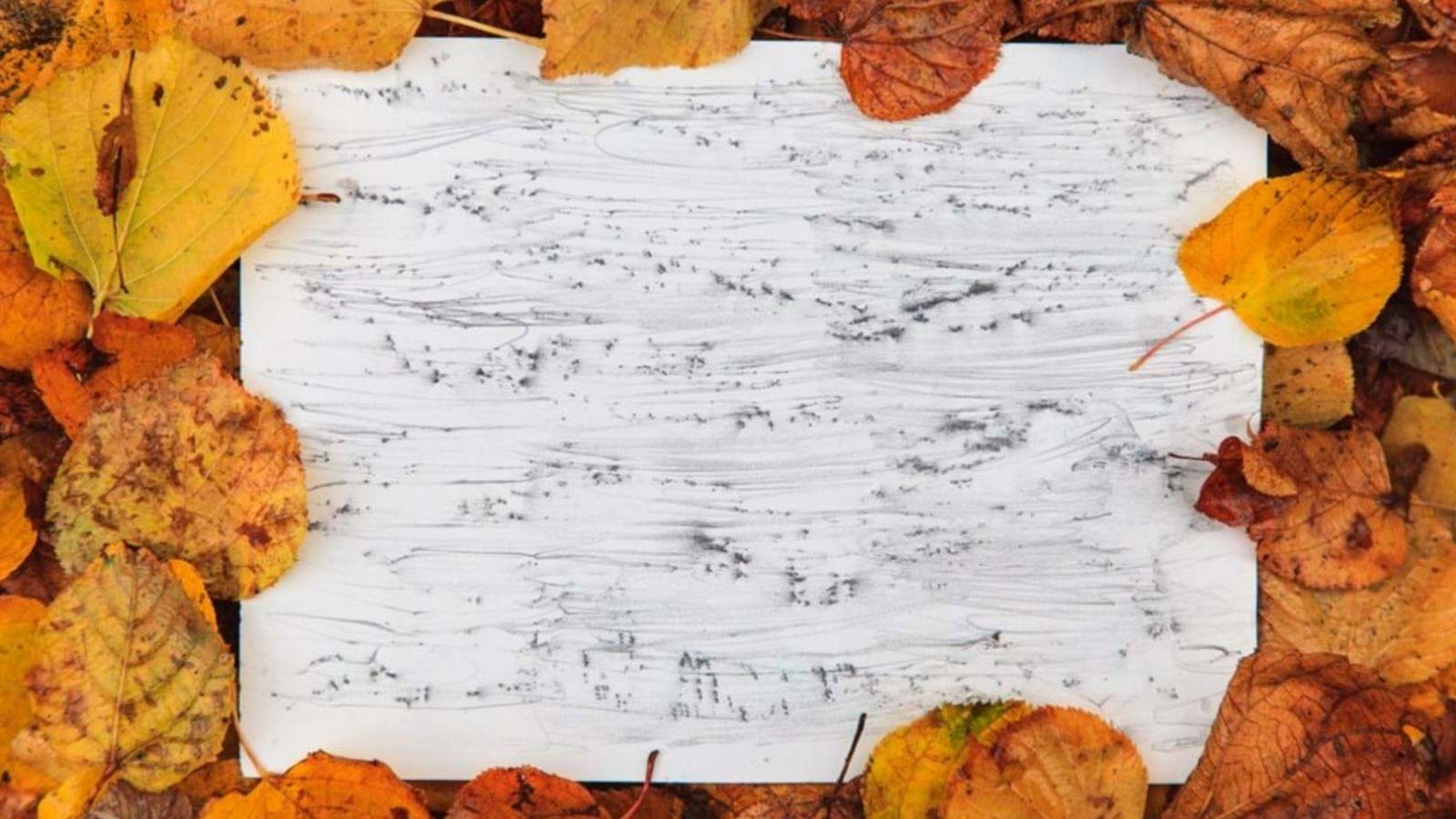 Bark Rubbing sheet amongst autumn leaves