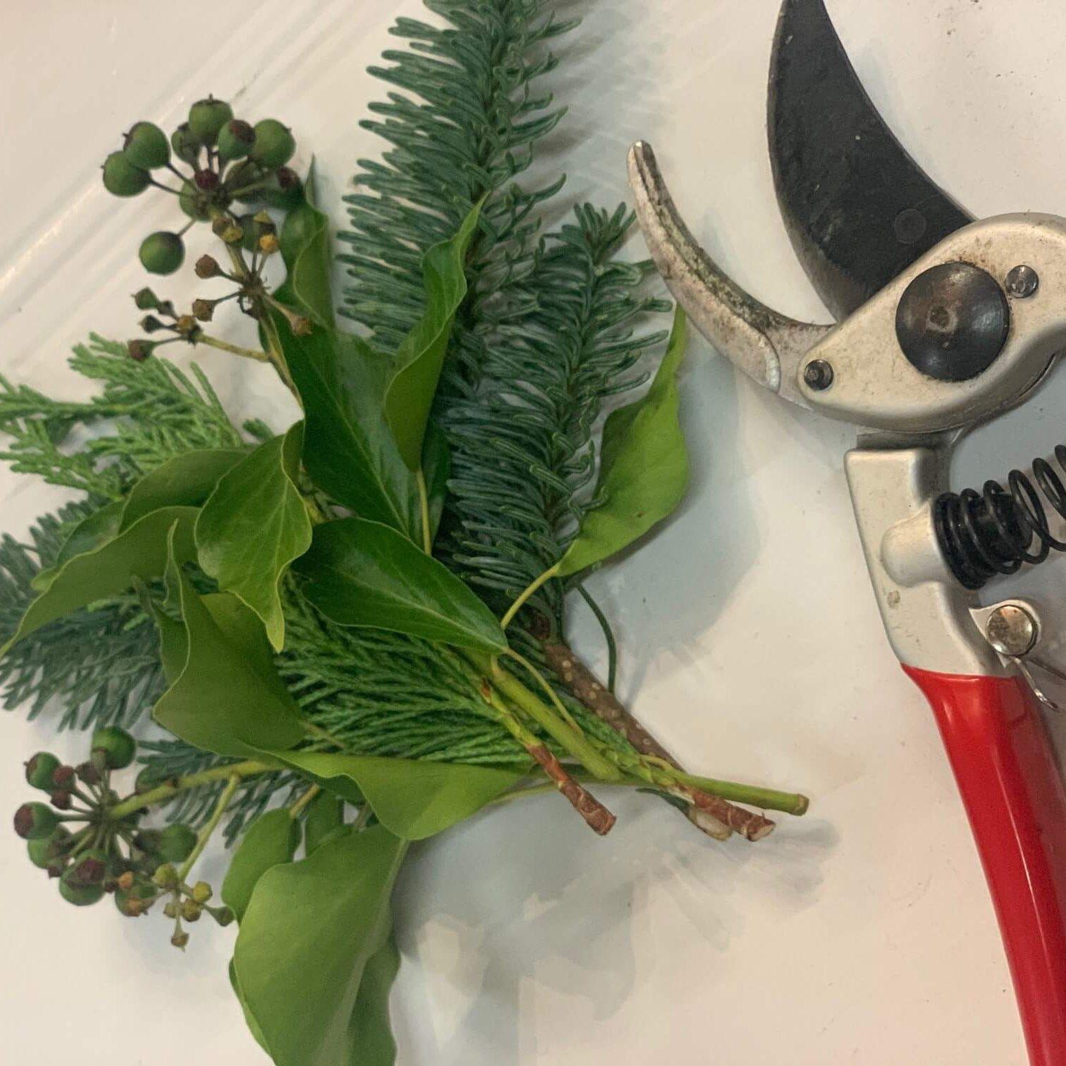 Evergreens & Sheers